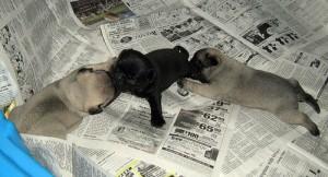 puppy on newspaper